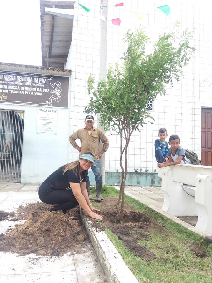 Praça da Paz no São João I ganha mudas de Pau-Brasil, árvore em extinção.